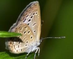 zmutowane-motyle