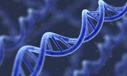 DNA-zapis
