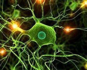 neurony-zdolnosci-uczenia