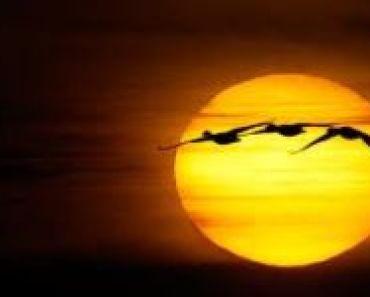 ptaki-sloneczne-wracaja-1