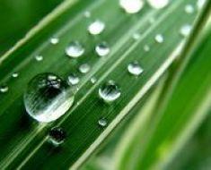 rosliny-ktore-oczyszczaja-powietrze
