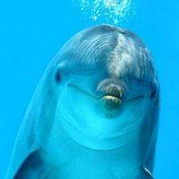 DelfinyOsobowosc2