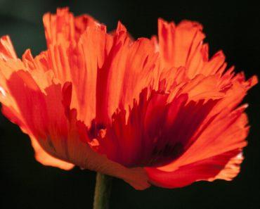 beltane święto kwiatów