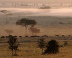 afryka-zalesiona