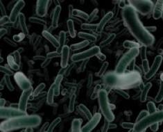 superbakterie20