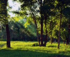 kąpiele leśne